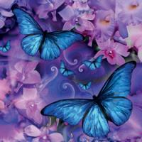 Butterfly Music Gift Card