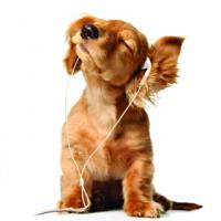 Chill Out Puppy Music Gift Card