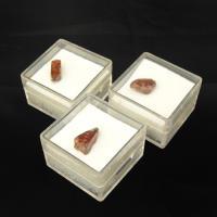 Boxed Zircon Crystals Sold Singly